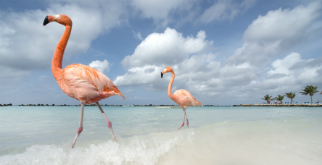 Earn 10,000 miles in Aruba